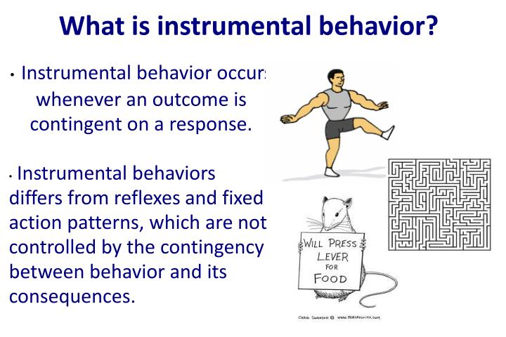 Instrumental behavior occurs whenever an outcome is contingent on a response.