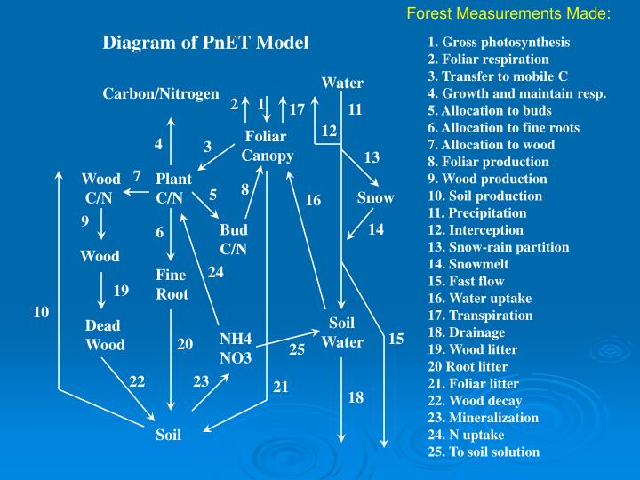 Forest Measurements Made: