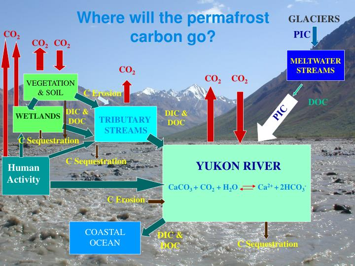 Where will the permafrost carbon go?