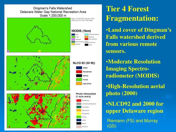 Tier 4 Forest Fragmentation: