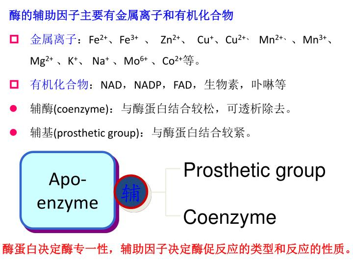酶的辅助因子主要有金属离子和有机化合物