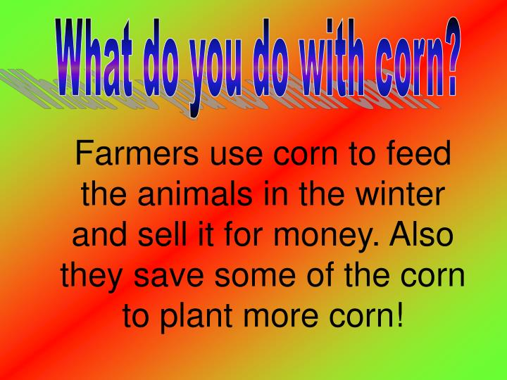 What do you do with corn?