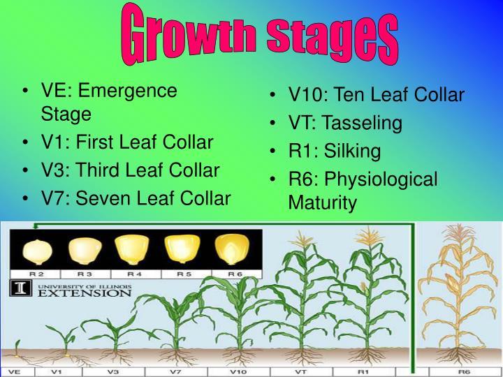 VE: Emergence Stage