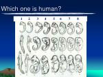 which one is human2