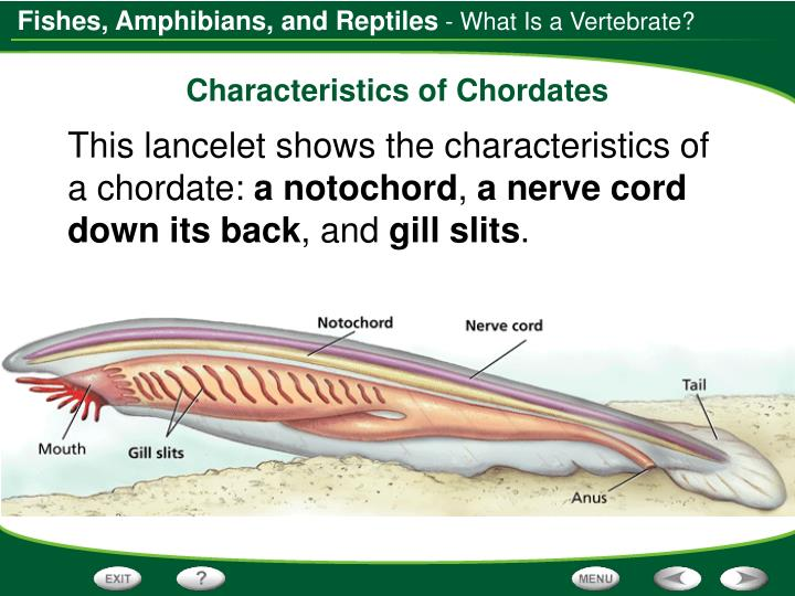 - What Is a Vertebrate?