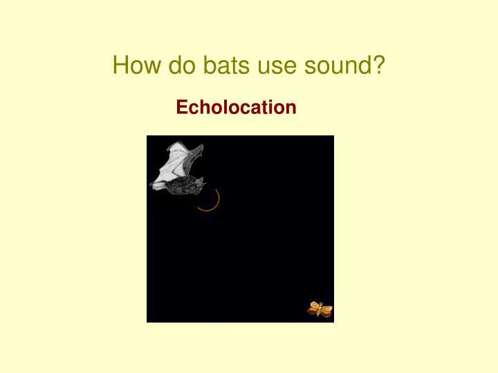 How do bats use sound?