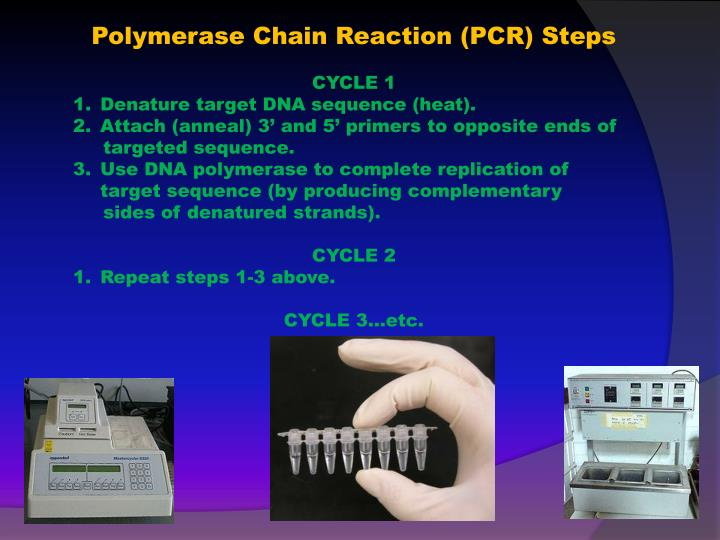 Polymerase Chain Reaction (PCR) Steps