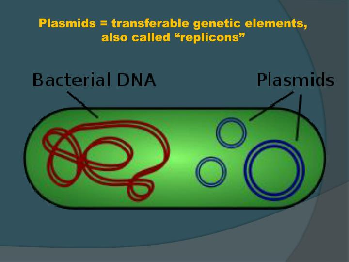 """Plasmids = transferable genetic elements, also called """"replicons"""""""