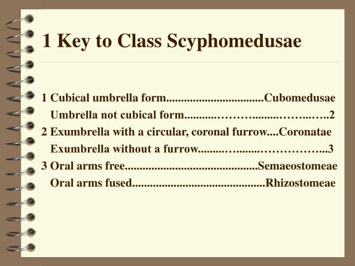 1 Key to Class Scyphomedusae