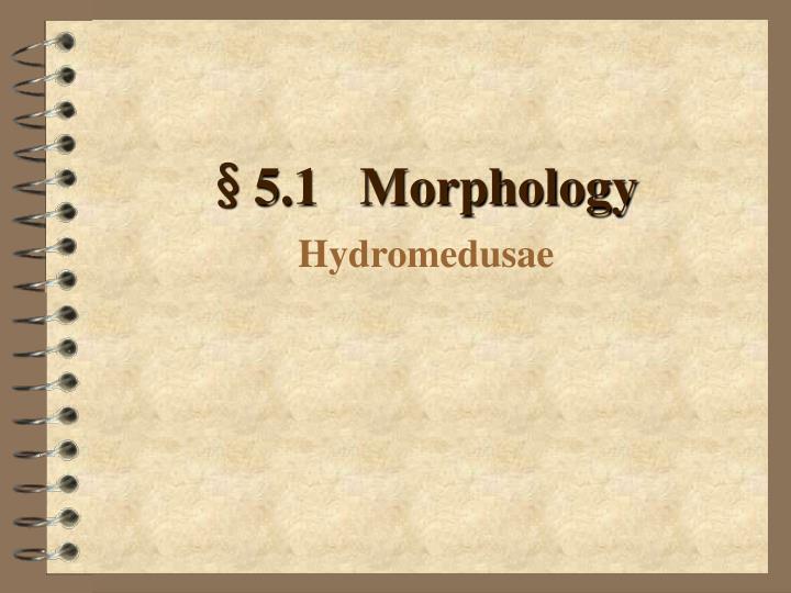 5 1 morphology hydromedusae