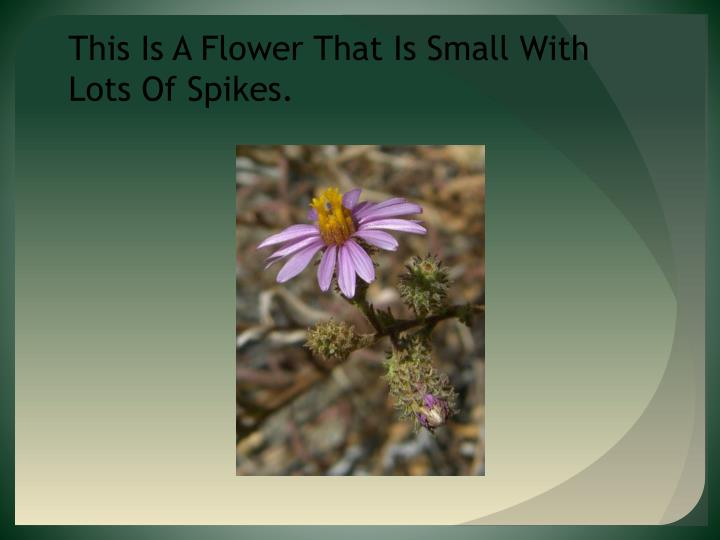 This Is A Flower That Is Small With Lots Of Spikes.