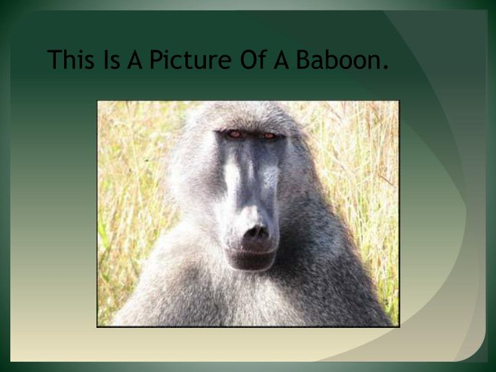 This Is A Picture Of A Baboon.