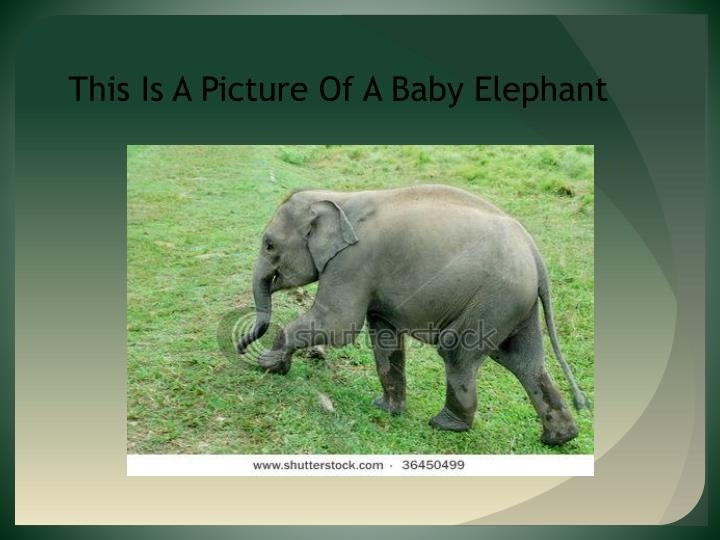 This Is A Picture Of A Baby Elephant