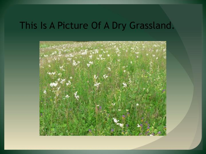 This Is A Picture Of A Dry Grassland.