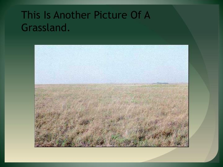 This Is Another Picture Of A Grassland.