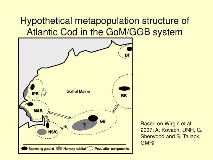 Hypothetical metapopulation structure of Atlantic Cod in the GoM/GGB system
