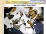 an invasive species
