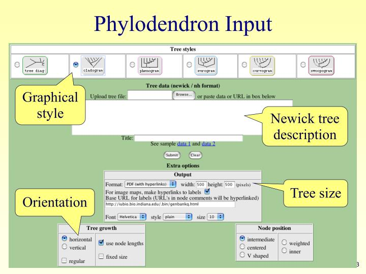 Phylodendron Input