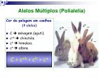 alelos m ltiplos polialelia