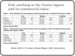 fish catching in the venice lagoon and its commercial value