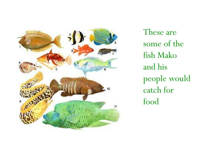 These are some of the fish Mako and his people would catch for food