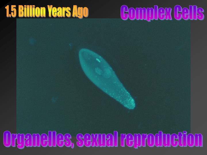 1.5 Billion Years Ago