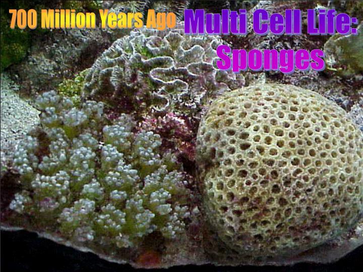 700 Million Years Ago