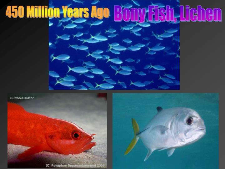 450 Million Years Ago