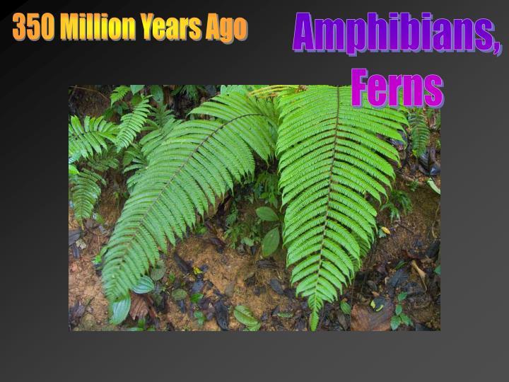 350 Million Years Ago