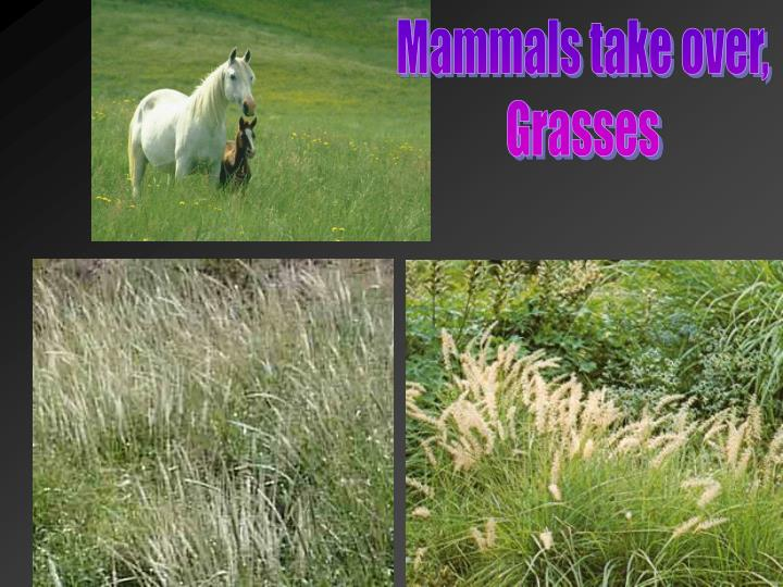 Mammals take over,