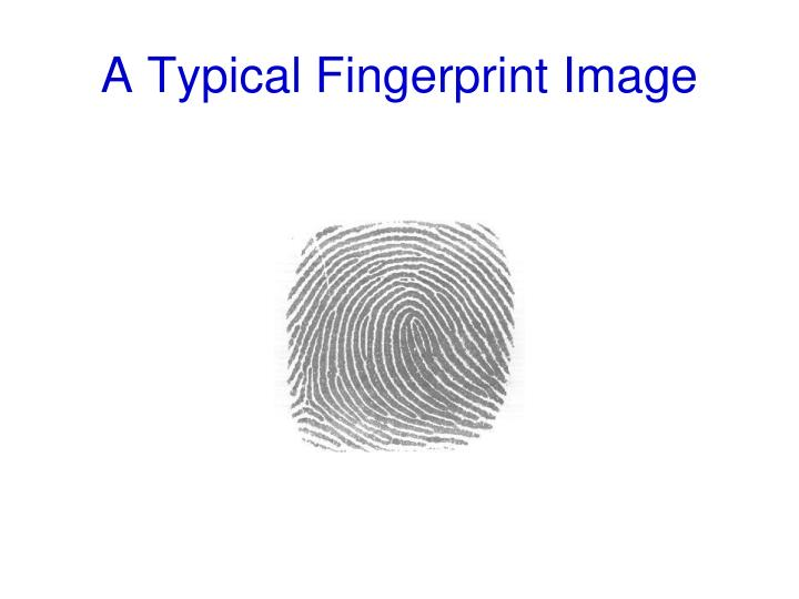 A Typical Fingerprint Image