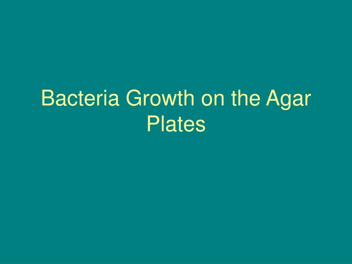 bacteria growth on the agar plates n.