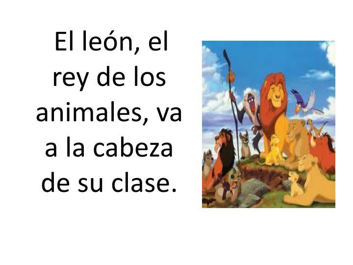 El león, el rey de los animales, va a la cabeza de su clase.