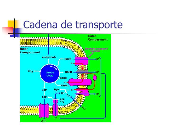 Cadena de transporte