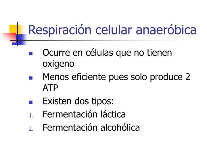 Respiración celular anaeróbica