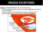 rg os excretores1