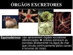 rg os excretores6