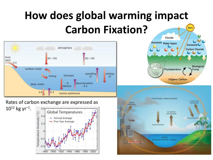 How does global warming impact Carbon Fixation?