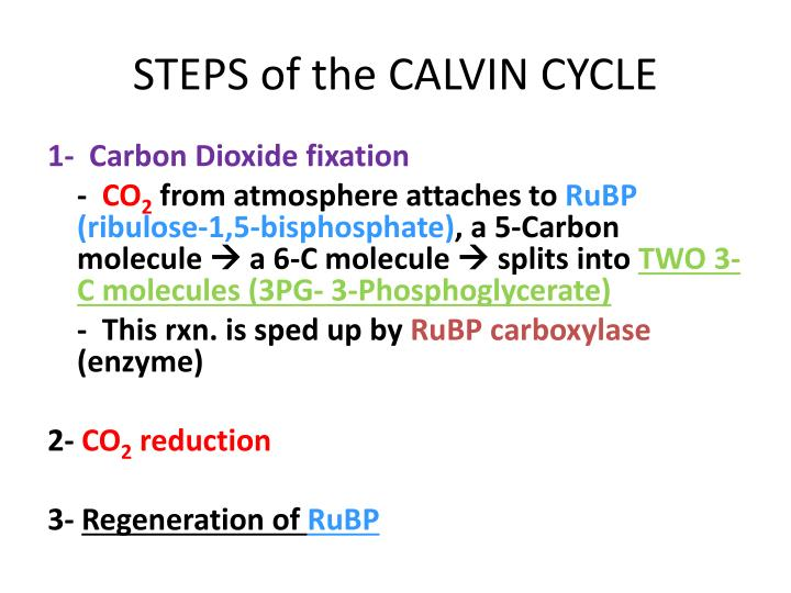 STEPS of the CALVIN CYCLE