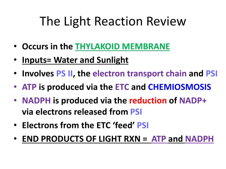 The Light Reaction Review