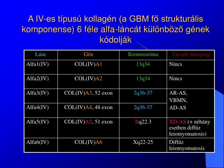 A IV-es típusú kollagén (a GBM fő strukturális komponense) 6 féle alfa-láncát különböző gének kódolják