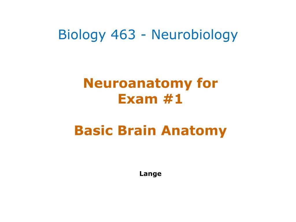 Ppt Neuroanatomy For Exam 1 Basic Brain Anatomy Lange Powerpoint
