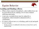 equine behavior23