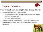 equine behavior8