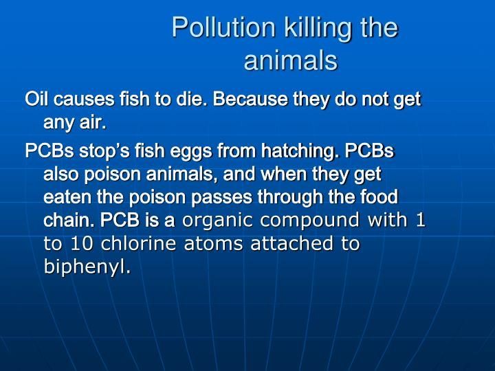 Oil causes fish to die. Because they do not get any air.
