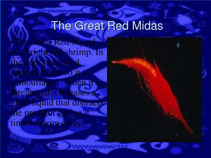 The Giant Red Mysid is a bright red shrimp. In the dark ocean red appears black so it is camouflaged. When it is threatened it releases a glow liquid that distracts the predator giving it time to swim away.