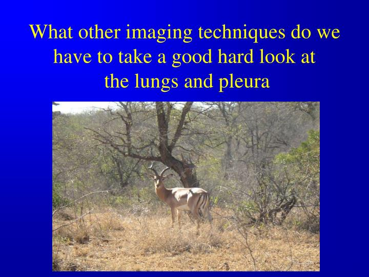 What other imaging techniques do we have to take a good hard look at