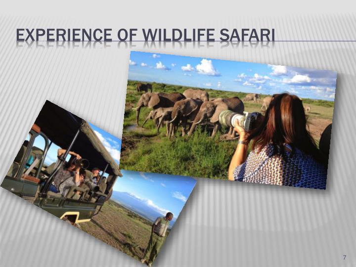 Experience of wildlife safari