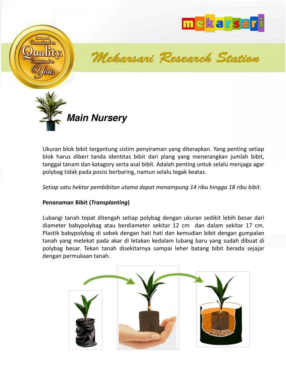 Ppt Nursery Management Strategies Pedoman Bagi Pengguna Benih Unggul Mekarsari Powerpoint Presentation Id 6217255