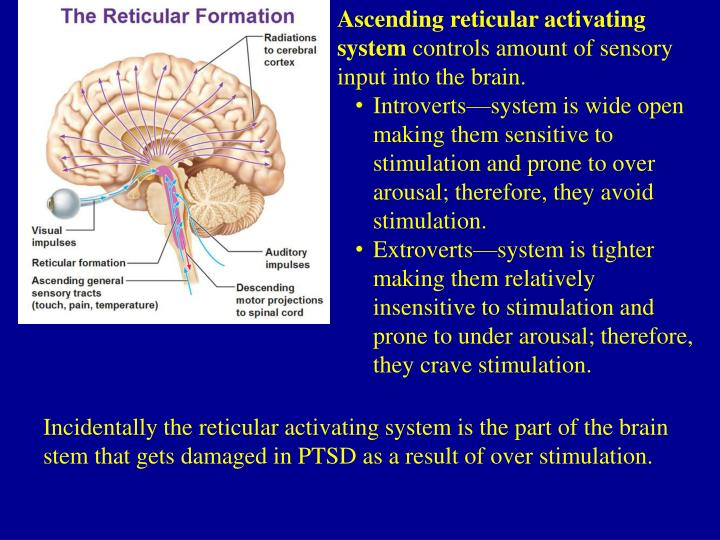 Ascending reticular activating system